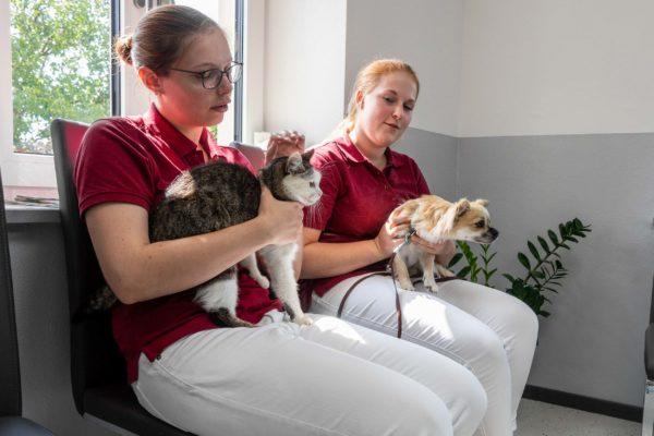 Tierarztpraxis Ulrike Renner in Arnschwang
